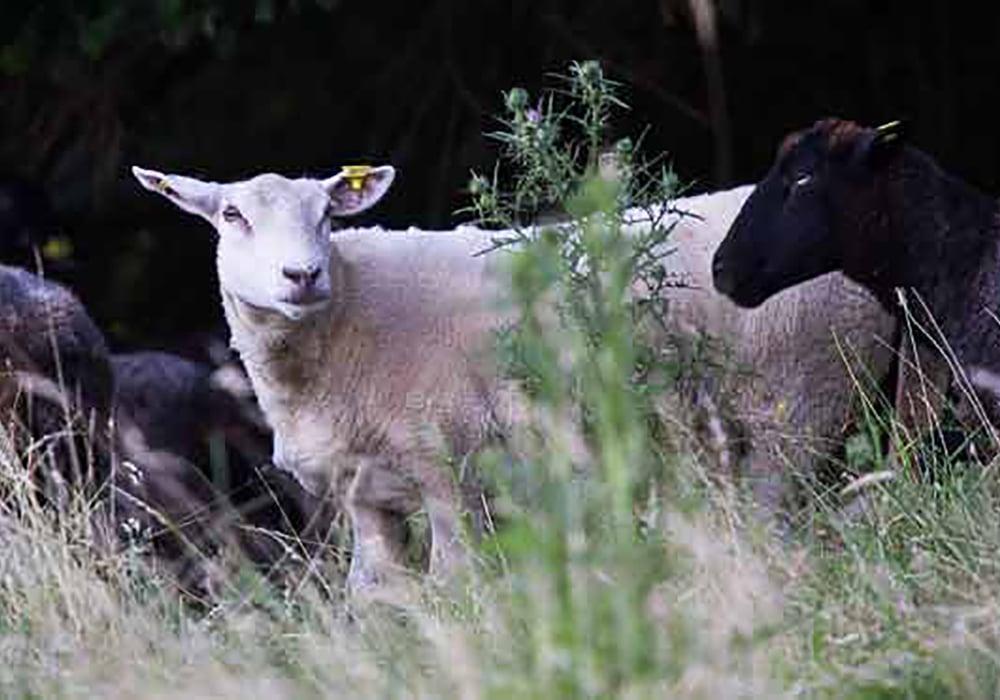 Ferme de la Mère Boitier Produits fermier Tramayes Cluny Saone-et-loire-Produit BIO 71 UCA Tramayes(7)