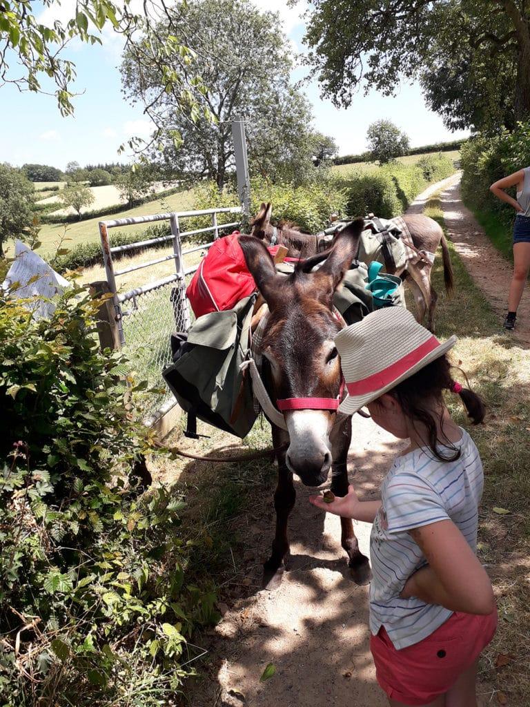 Les anes de Francis location d'anes bates tourisme Saone et loire UCA Tramayes-2